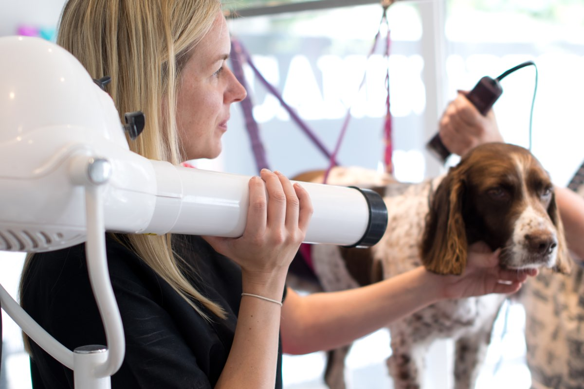 West Sussex Dog Grooming Academy